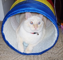 Kitso in his tube...