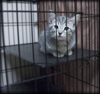 Caged Kitty Looking for a Forever Home!